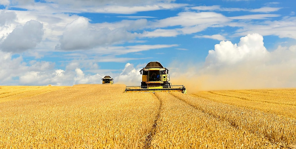 Two Combine Harvesters in Barley Field during Harvest