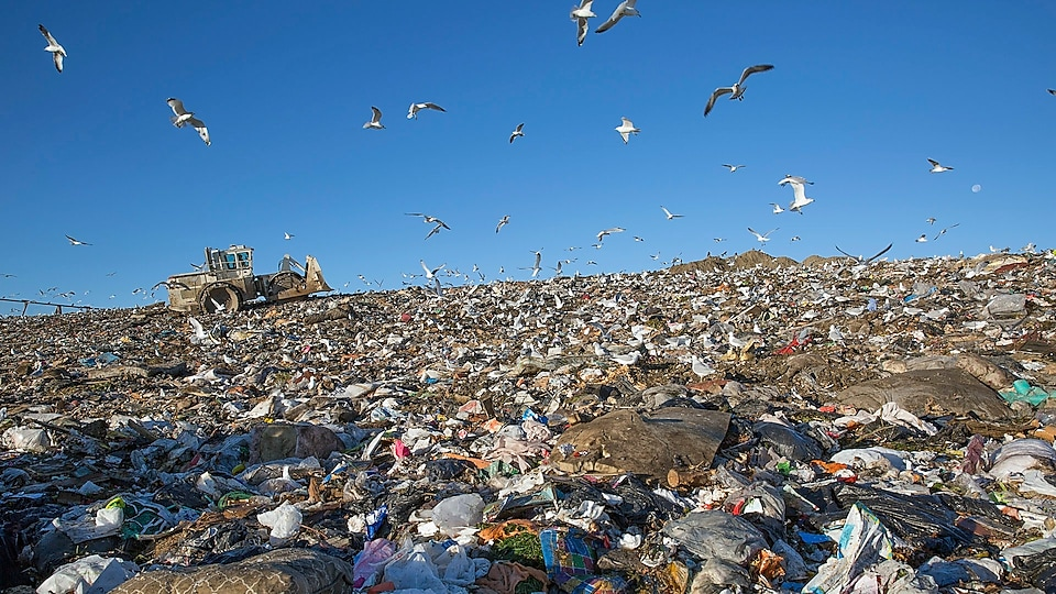 Seagulls flying over a garbage dump