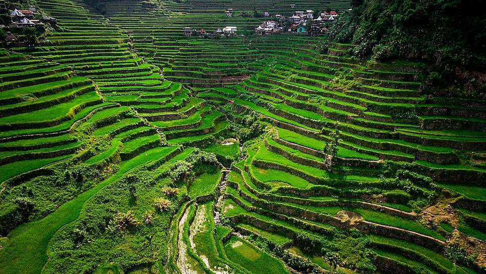 Terraced rice fields are common in Benguet, a region known as the salad bowl of the Philippines