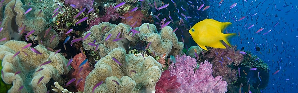 Conserving the Coral Triangle