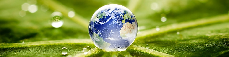 World in a drop of water on a leaf